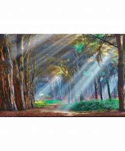 3D Bright Sunlight Rays Wallpaper BNS-362